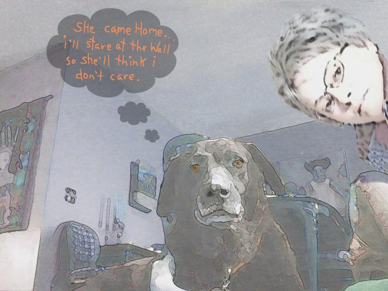 dog, home,